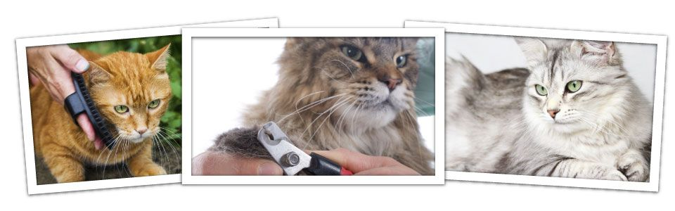 brushing a cat, cat getting its nails trimmed, long-haired cat